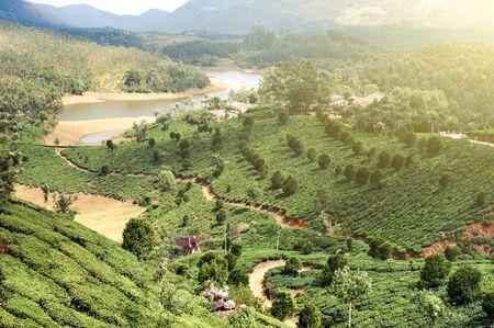 Tea plantation landscape under blue cloudy sky. Munnar, Kerala, India