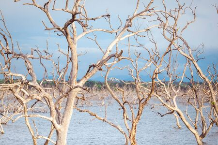 Amazing wild nature of Yala National Park in Sri Lanka. Landscape with river and drowned trees under blue sky