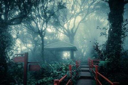Mysterious landscape of foggy forest with wooden bridge and weathered signpost. Surreal beauty of exotic trees, thicket of shrubs at deep tropical jungles. Fantasy nature and fairy tale background
