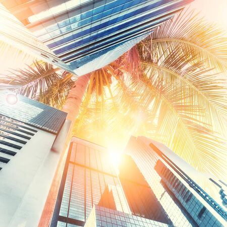 Abstract futuristic cityscape view with modern skyscrapers. Tropical city concept with palm trees and shining sun  at sunny day. Urban architecture background