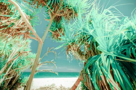 Amazing relaxing view of blue sky at sunny day and foliage of tropical pandanus tree or screw palm growing near ocean. Gorgeous nature landscape, vacation place and travel concept.