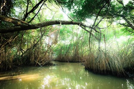 Mysterious landscape and surreal beauty of jungles with tropical river and mangrove rain forest. Sri Lanka nature and travel destinations 版權商用圖片