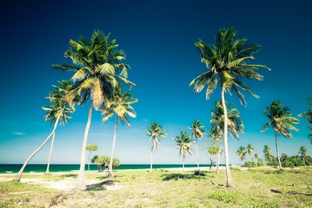 Amazing tropical beach landscape with palm trees and turquoise ocean waves.  Green leaves swaying in wind at sunny day. Romantic relaxation and vacation at tropics. Luxury travel destinations Stock Photo