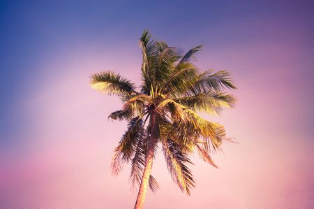 Sunset at tropics with palm trees against amazing colorful sky. Sun shining in leaves of tropical plant. Abstract summer travel background