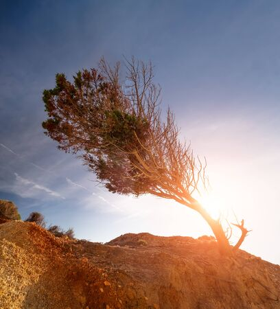 Stunning view of lonely tree growing drought desert rock.