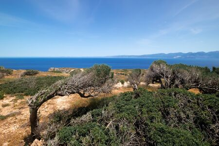Amazing view of old olive tree on rocky hill, Crete island. Greece. Trunk twisted under blowing mediterranean wind of Aegean sea. Natural landscape and heritage plant over blue sea and azure water Zdjęcie Seryjne
