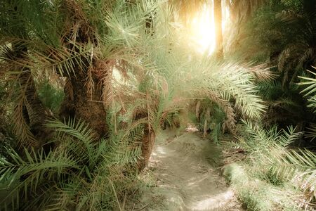 Bright sun shining it path way with tunnel inside abstract mysterious deep forest landscape with exotic palm trees. Surreal beauty of dense jungles. Fantasy colors and fairy tale background