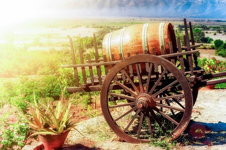 Wooden barrel with vine on cart