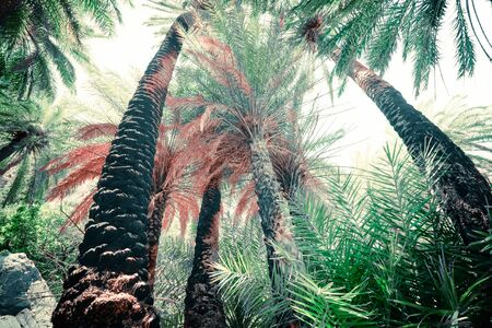 Abstract mysterious landscape of deep forest with exotic palm trees. Bright composition of tropical plants in wild nature. Surreal beauty of dense jungles. Fantasy colors and fairy tale background