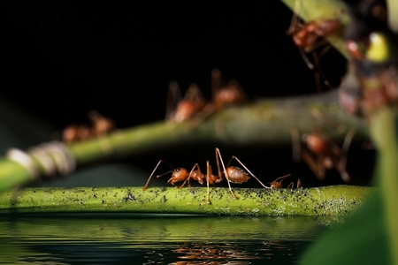 Ants are to escape the water rises. Stock Photo