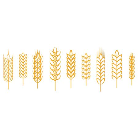 Ears of wheat, rye, rice. Cereals Design Elements. Vector.