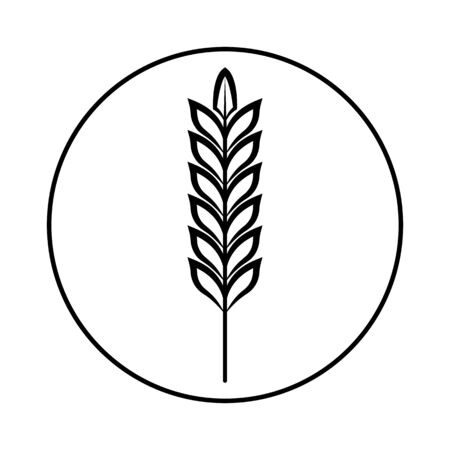 Spikelet of grain crop. Wheat, rye, rice. Vector image isolated on a white background.