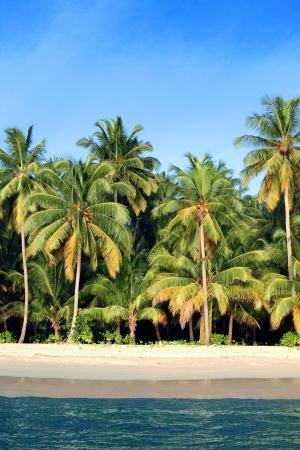 tropical island: Coconut palm tropical beach
