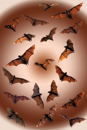 fruit bat: Spooky Halloween fruit bats Stock Photo