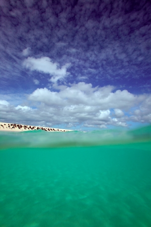 cay: Michaelmas Cay green ocean Great Barrier Reef