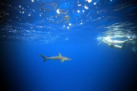 snorkelers: Reef shark ans snorkelers underwater