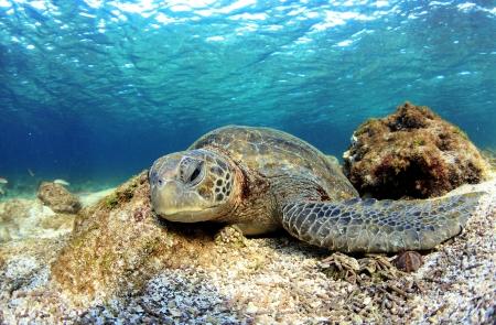 Carey se relaja bajo el agua