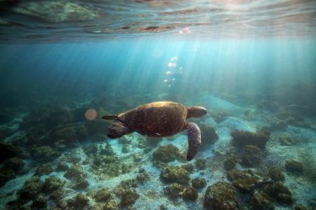 Sea turtle swimming underwater in tropical lagoon Foto de archivo