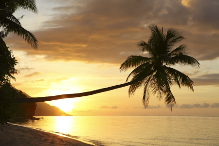 ambiance: Palm tree on tropical island beach at sunset in Raja Ampat, West Papua Stock Photo