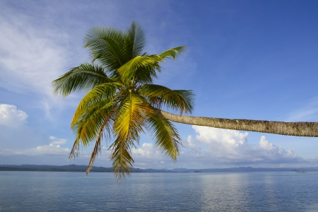 waters: Palm tree on exotic tropical island beach in Raja Ampat, West Papua  Stock Photo