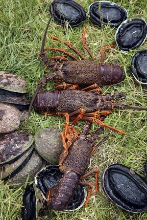 Spiny crayfish (lobster) and paua (abalone), New Zealand Foto de archivo