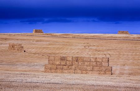 Haystacks in agriculture field
