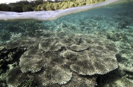 Coral reef underwater view, Bunaken Island, Sulawesi, Indonesia