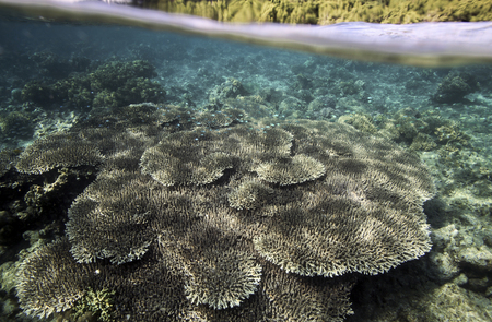 Coral reef underwater view, Bunaken Island, Sulawesi, Indonesia Stock Photo - 106572889