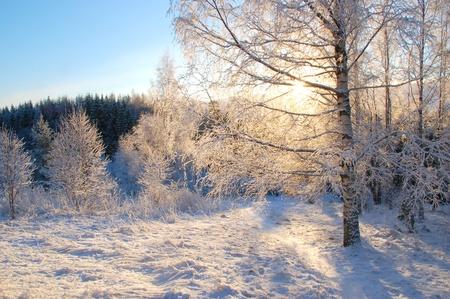 winter finland: Winter Stock Photo