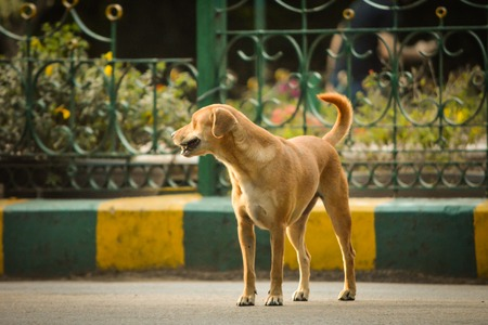 The dog is standing on the road. Stock Photo
