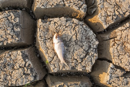 Died Fish in a dried up empty reservoir or dam due to a summer heatwave, low rainfall, pollution and drought in north karnataka,India. Standard-Bild