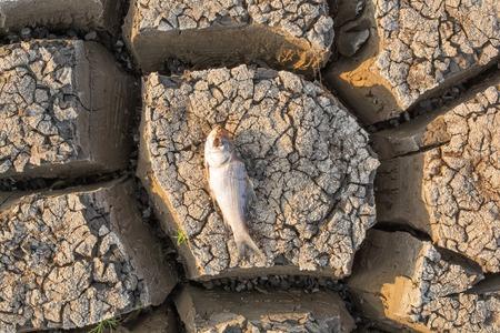 Pez muerto en un embalse vacío seco o presa debido a una ola de calor de verano, escasas precipitaciones, contaminación y sequía en el norte de Karnataka, India.