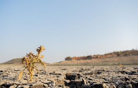 Árboles muertos en un embalse vacío seco o presa durante una ola de calor de verano, escasas precipitaciones y sequía en el norte de Karnataka, India.
