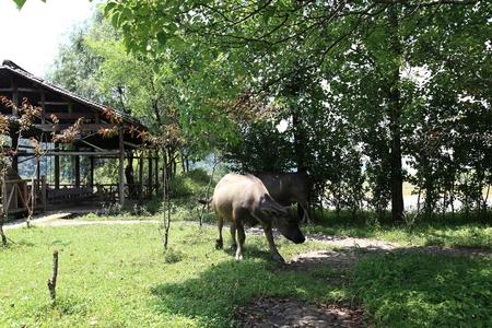 intangible: buffalo at park