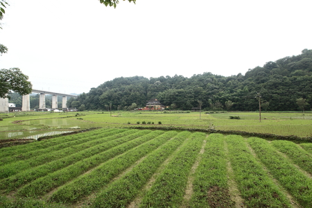 transplanting: farmland