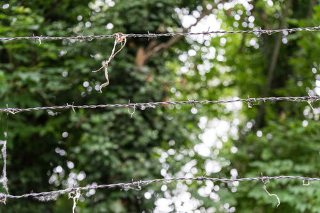 barbed wire in front of forest