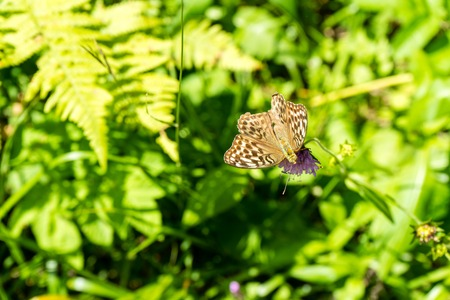 brown butterfly on purple flower