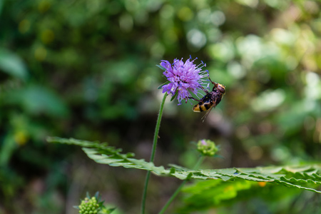 wasp on purple flower with green leaf in the back