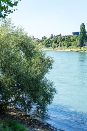 rhine river in basel with tree and landscape