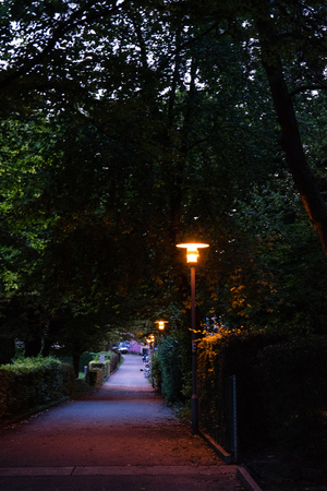 pathway street night with street lights and trees