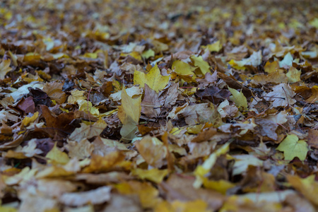 Autumn leaf leaves on floor yellow and brown