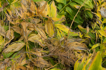 yellow plant waste close up view gardening