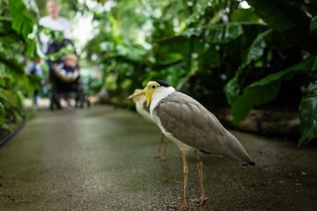 tropical bird with white and grey feather on concrete floor