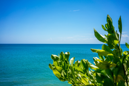 Tree and full frame ocean view with blue sky 写真素材