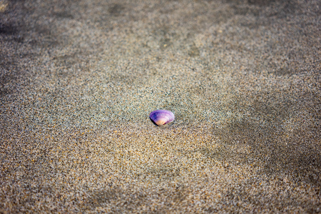 Purple shell laying in sand on beach, close up view
