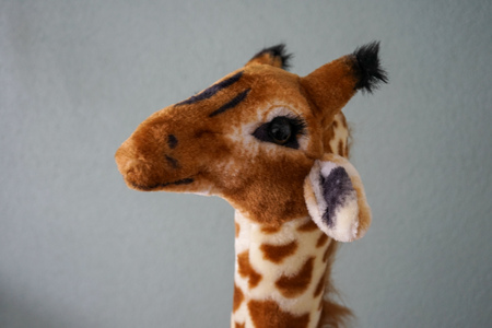 plush giraffe head close up view in front of wall 写真素材