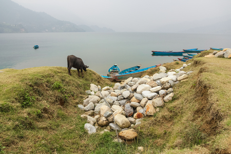 phewa: Phewa lake in cloudy weather, Pokhara, Nepal