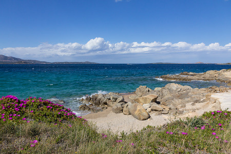 Costa Smeralda seascape with beautiful turquoise water and purple flowers on the seashore. Beach in Sardinia island, Italy