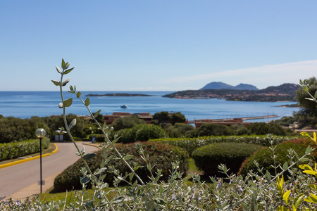 Costa Smeralda landscape with a view on wild plants and the sea. Sardinia island, Italy
