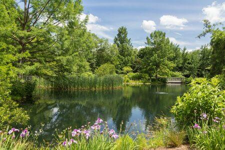 Hermosas plantas cerca del lago. Foto de archivo